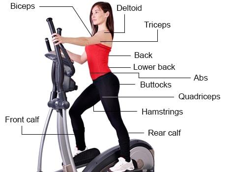 grupo muscular eliptico min Elíptico Trabalha Qual Parte do Corpo